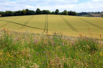 Farmland field margin