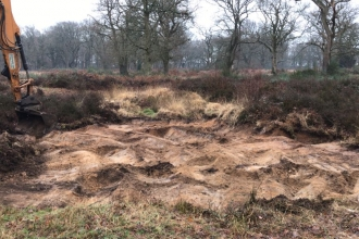 Scrapes at Hertford Heath