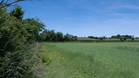 Farmland hedgerow