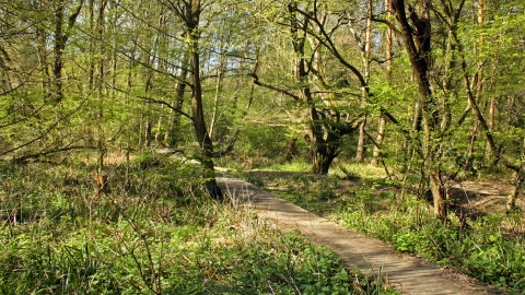 Danemead Nature Reserve