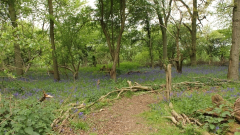 Hawkins Wood Nature Reserve