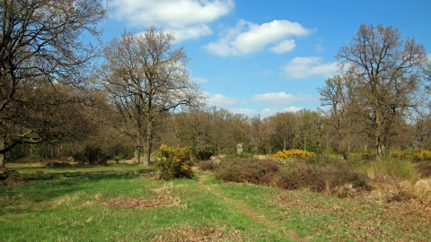 Hertfordshire Heath