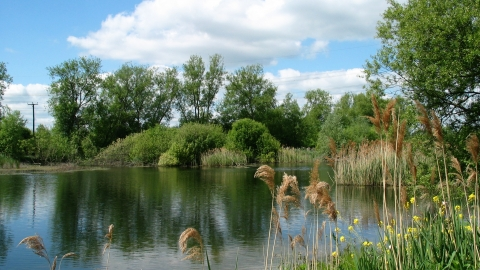Rye Meads Nature Reserve