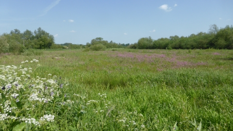 Thorley Wash Nature Reserve