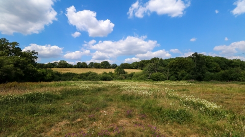 Frogmore Meadows