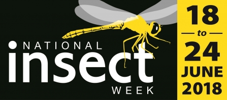 National Insect Week 2018