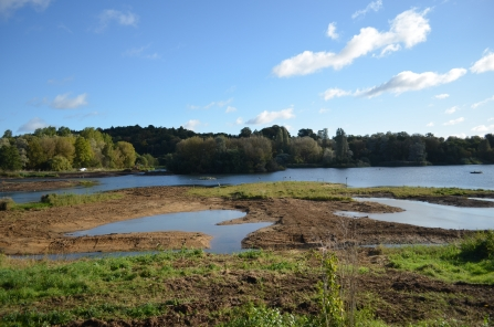 Newly created wader island at Amwell Nature Reserve