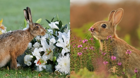 Hare and rabbit juxtaposed