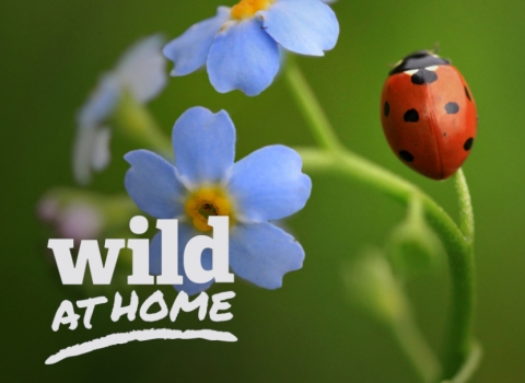 Wild At Home - minibeasts