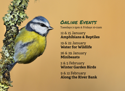 Wild At Home - Winter Event Listing